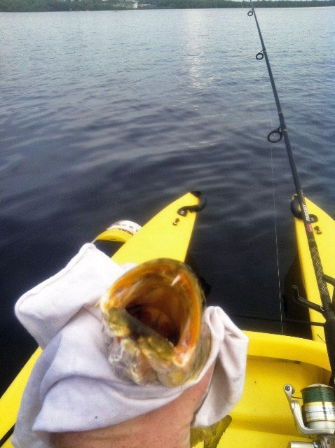 fish tooth - kayak fishing trip, Tropical Point, FL