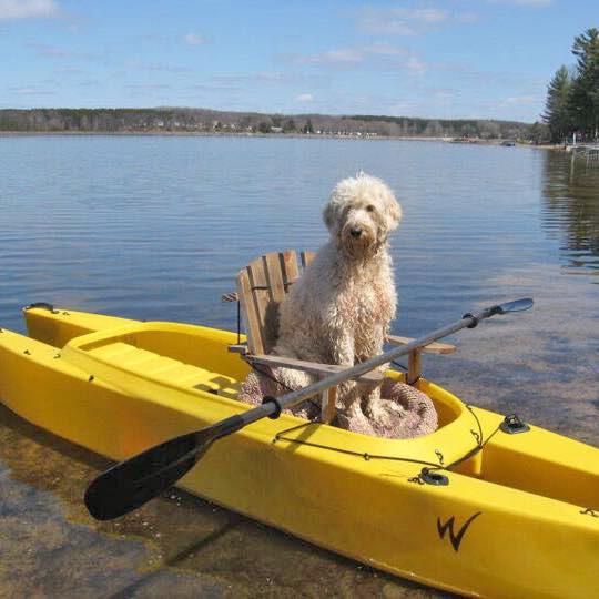 Dog seated comfortably in a Wavewalk 500 kayak