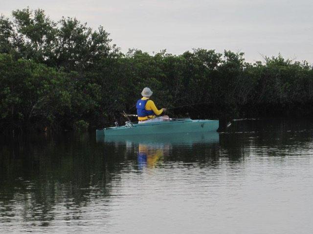 art-fishing-the-mangroves