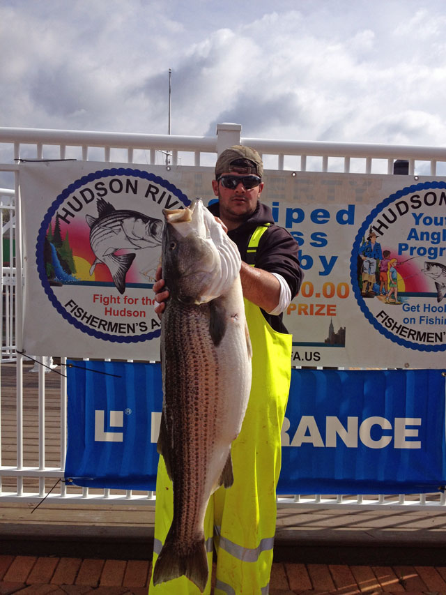 45 inch 42 lbs striper Hudson derby winner 2014