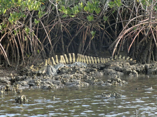 alligator-skeleton-on-river-bank
