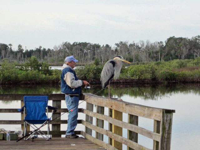 pier-fisherman-and-blue-heron