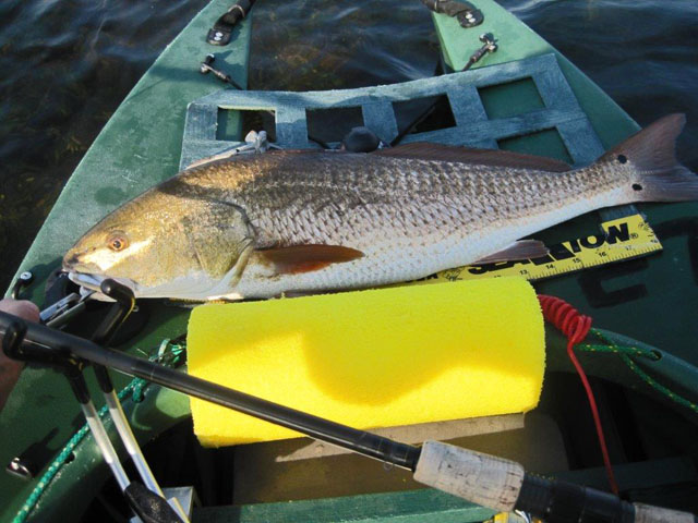 big-redfish
