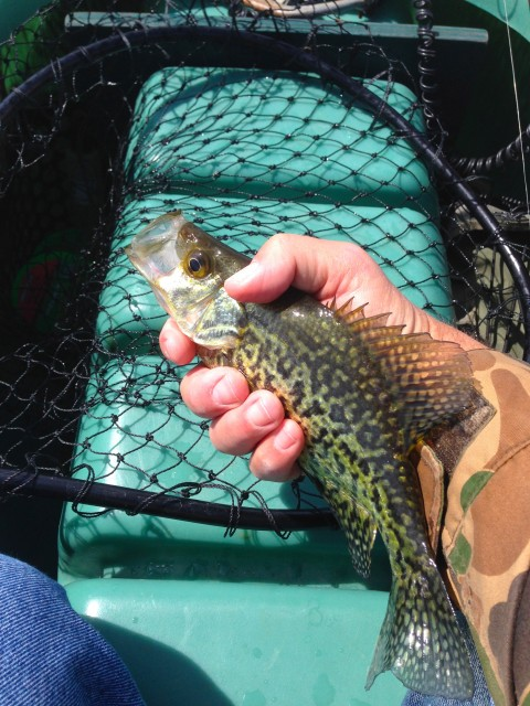 first-crappie-of-the-2014-fishing-season-wisconsin