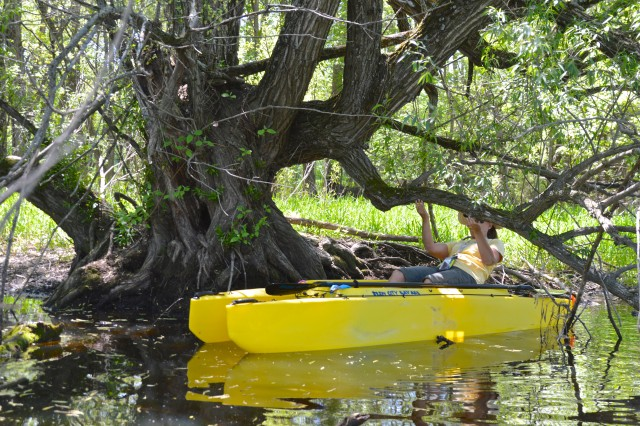 jeanne-paddling-her-kayak-under-a-low-branch