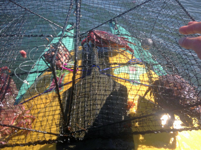 opening-a-trap-with-a-crab-and-bait-on-kayak-deck