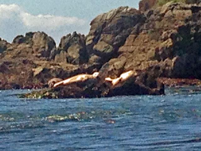 Kayak crabbing in bodega bay by edwin warner wavewalk for Bodega bay fishing reports