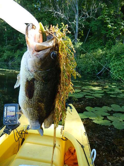 Big-Eye-3-lbs-bass