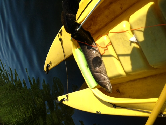 10-fish-caught-with-bow-and-arrow-in-kayak-cockpit
