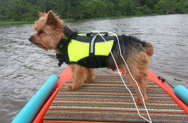 dog-traveling-on-fishing-kayak-platform