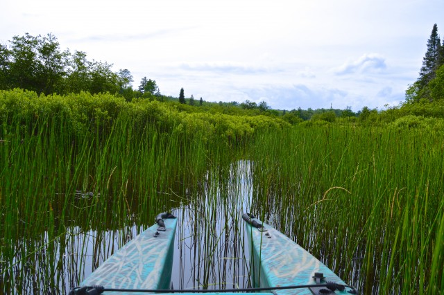 my-fishing-kayak-going-through-the-weeds