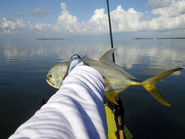 jack-crevalle-in-hand