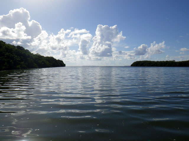 view-of-the-water-and-mangroves