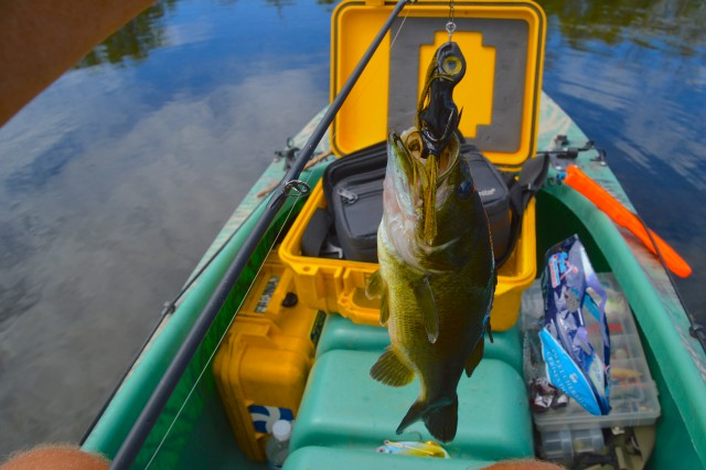 largemouth bass caught on a frog - Fox river