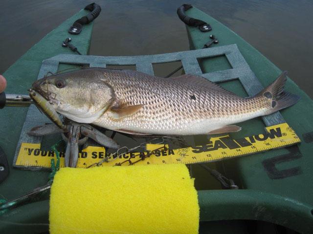big-redfish-10-30-2014