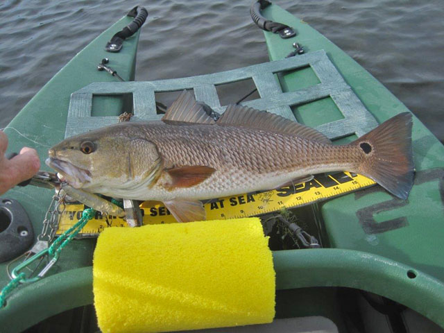 another-redfish