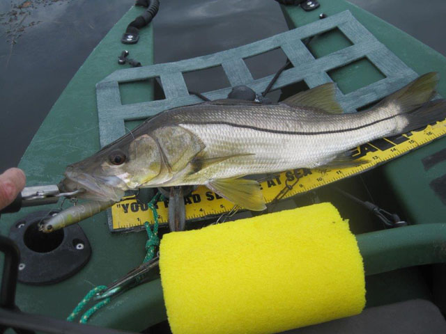 snook-10-30-2014