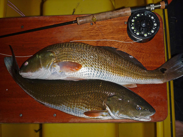 two-redfish-and-fly-fishing-rod