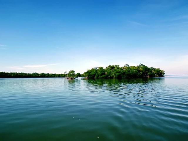 mangroves-1