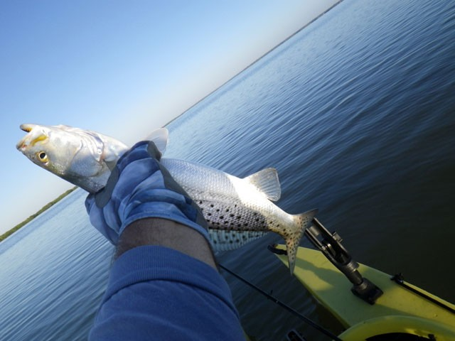 nice-seatrout-1