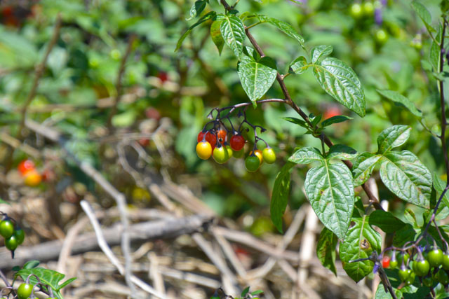 berries-on-the-river-bank