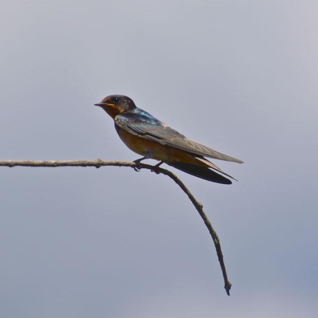bird-photography-Fox-river