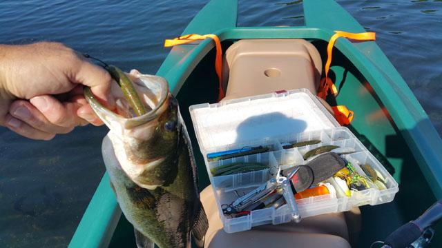 largemouth-bass-in-W700-kayak-08-2015