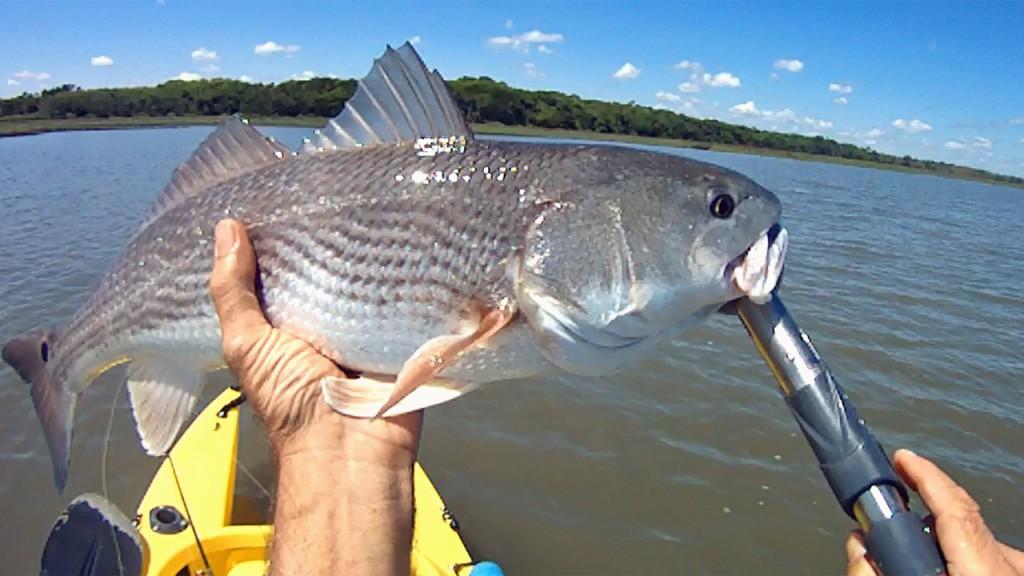 big-fat-redfish-1280