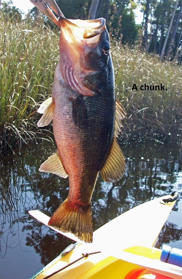 chunky-bass-1