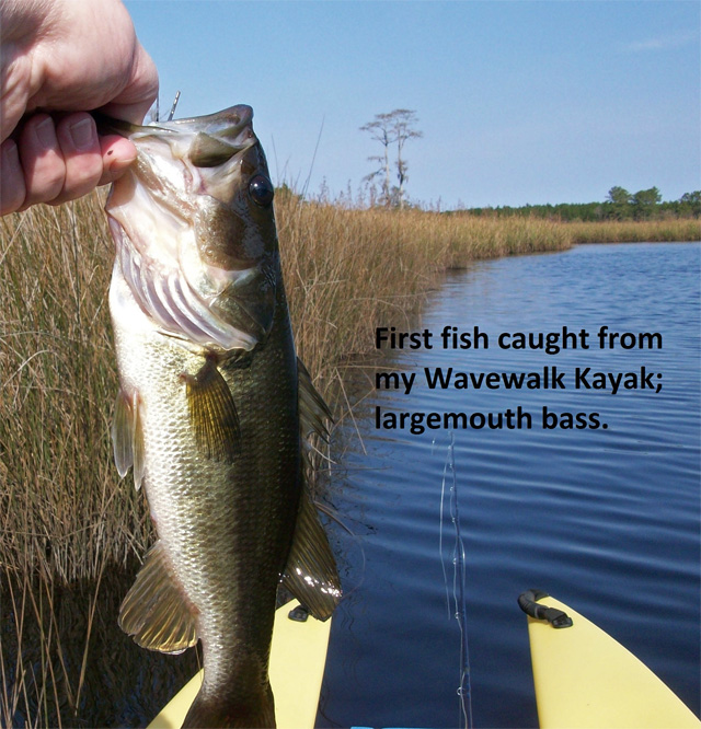 first-fish-caught-from-my-W700-kayak-a-bass