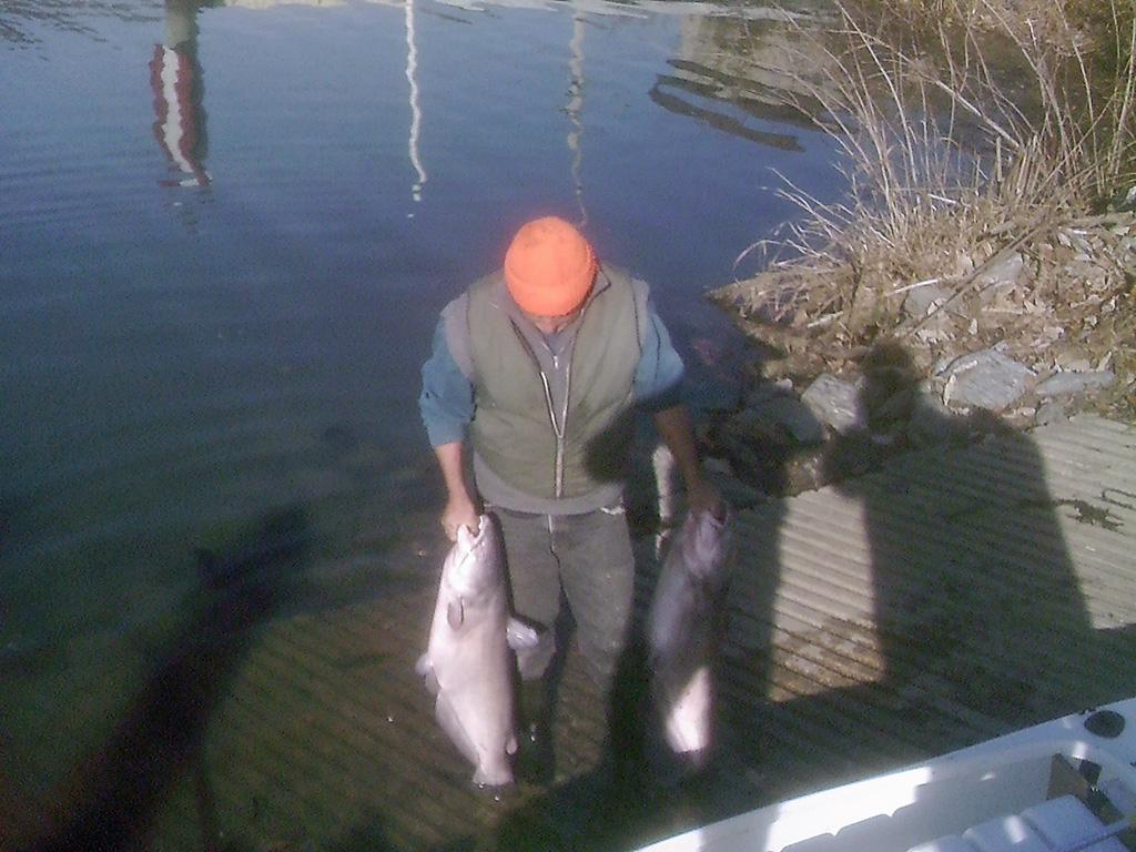25 lbs and 30 lbs catfish