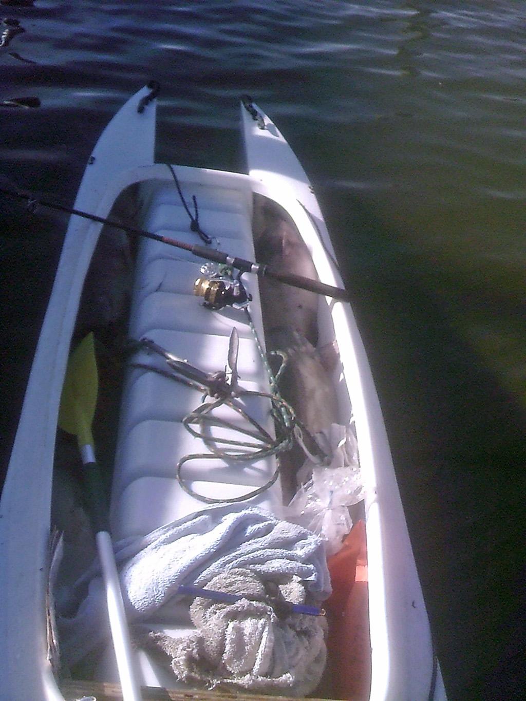 a boatload of cat fish