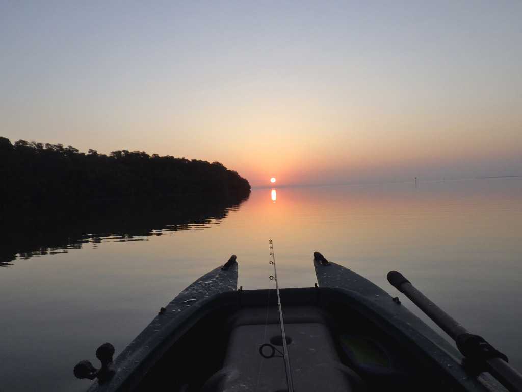 Flamingo sunrise on the water