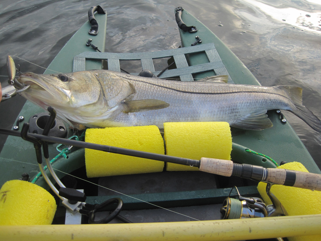 big snook 003
