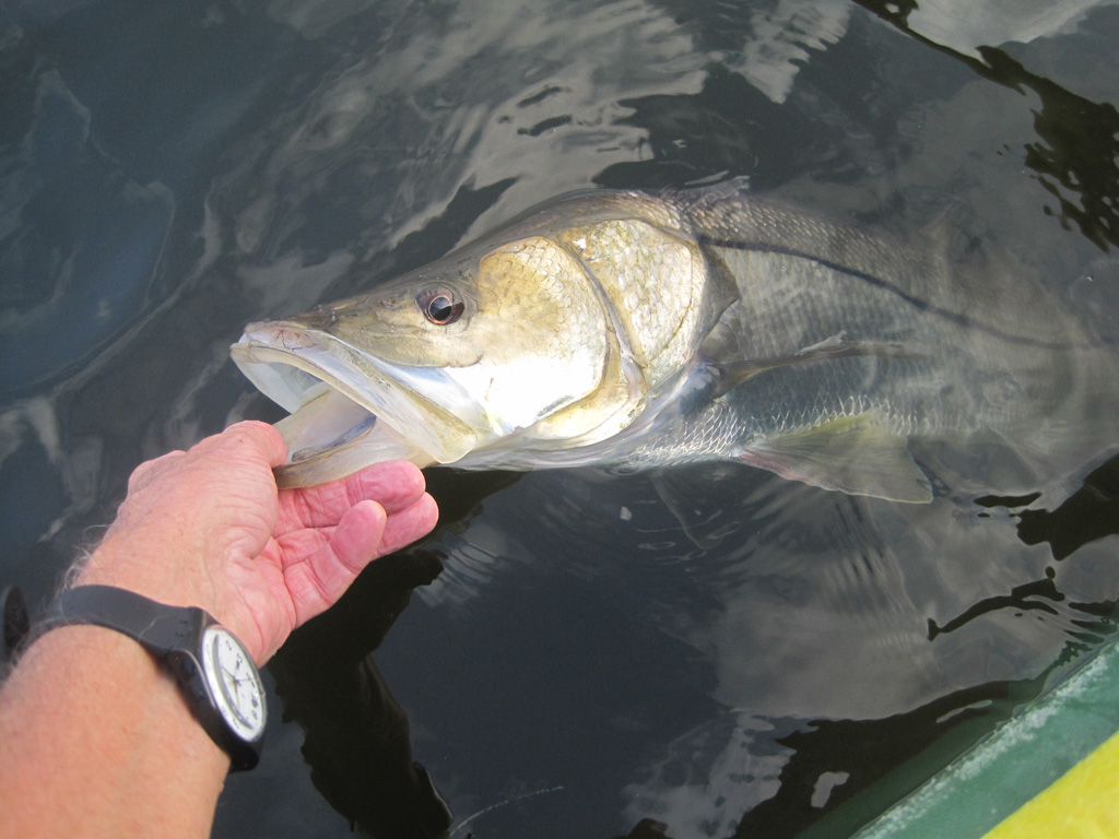 big snook 006