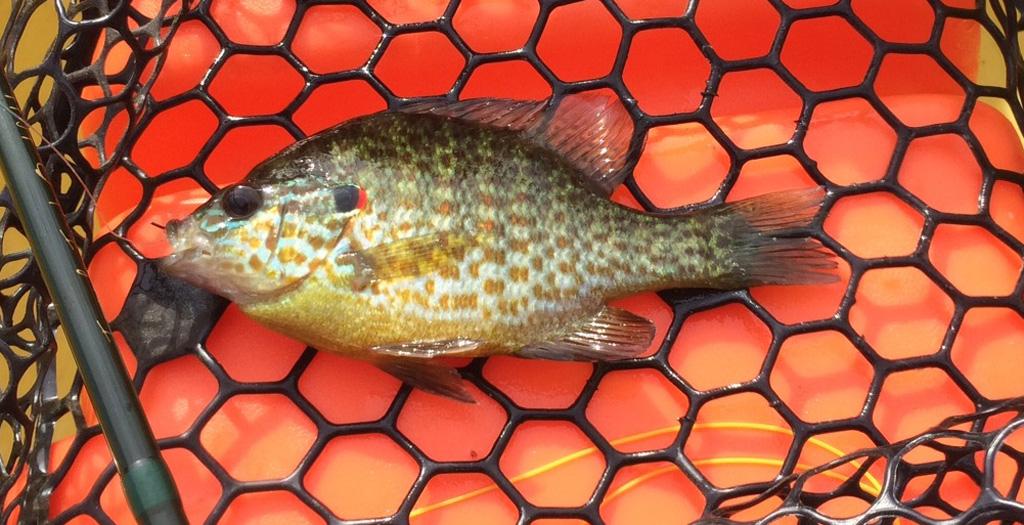 sunfish NW Creek