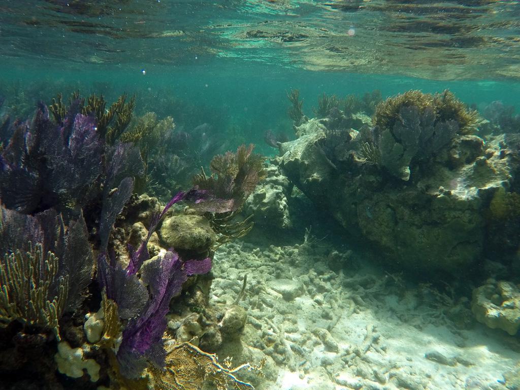 Underwater scenery - coral reef