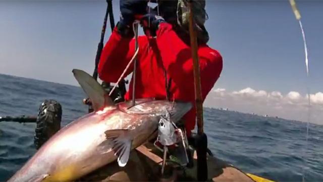 black-fin-tuna-inWavewalk-500-(2)-640