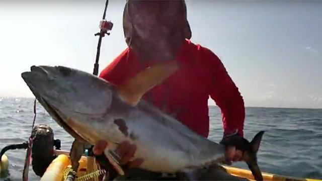 black-fin-tuna-inWavewalk-500-640