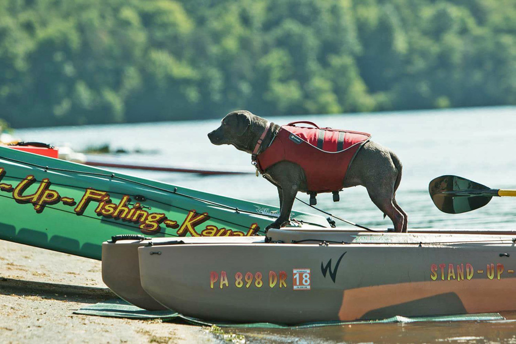 kayaking-dog