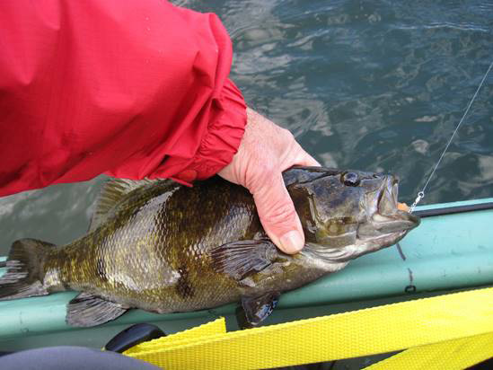 15-inch-smallmouth-bass-allegheny-pa
