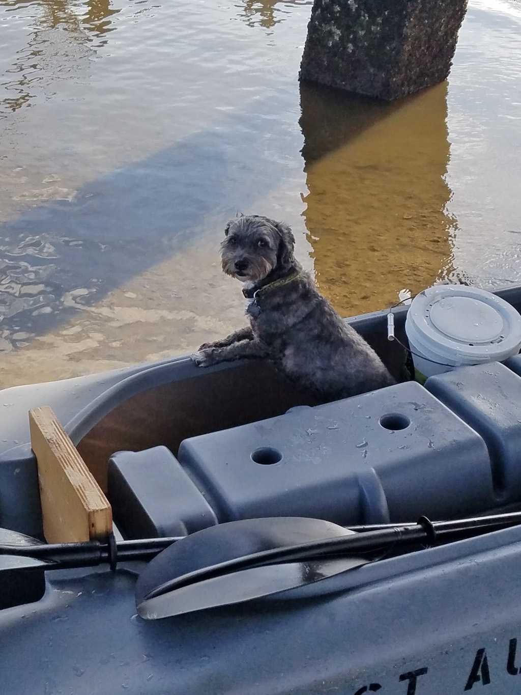 Cute dog standing in the cockpit of a Wavewalk S4 fishing kayak