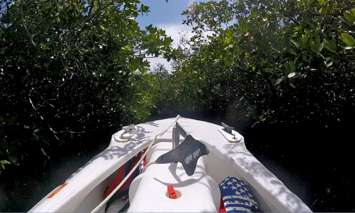 Precision driving through the mangrove tunnel maze – Wavewalk S4 kayak skiff