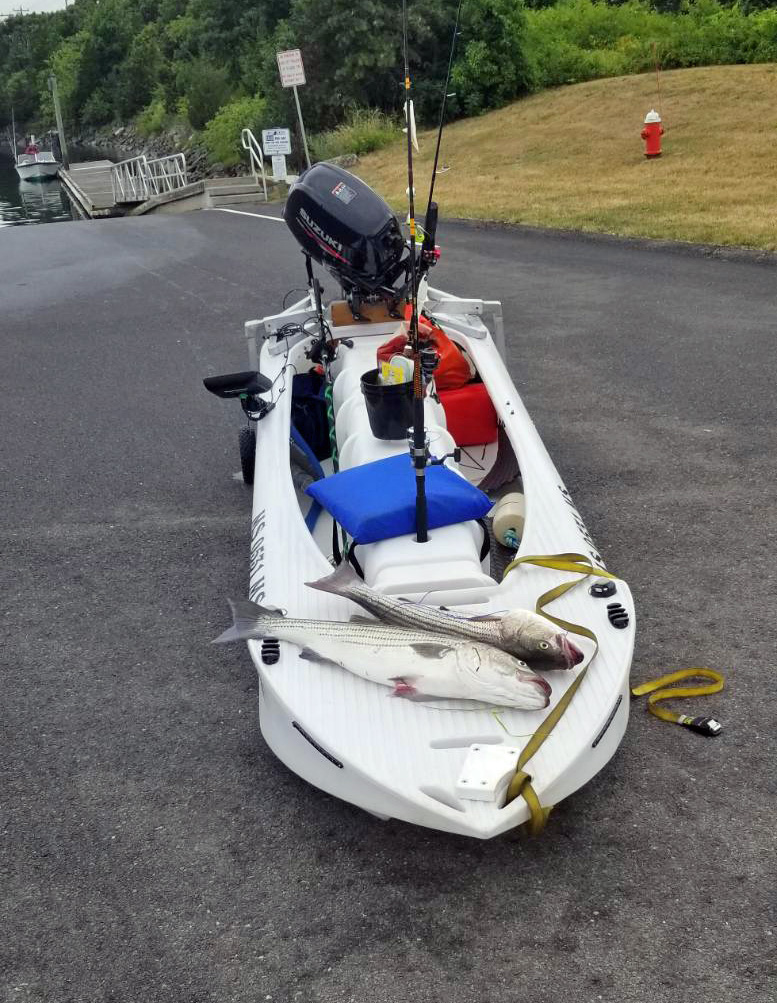 two stripers caught offshore in a Wavewalk S4 motor fishing kayak