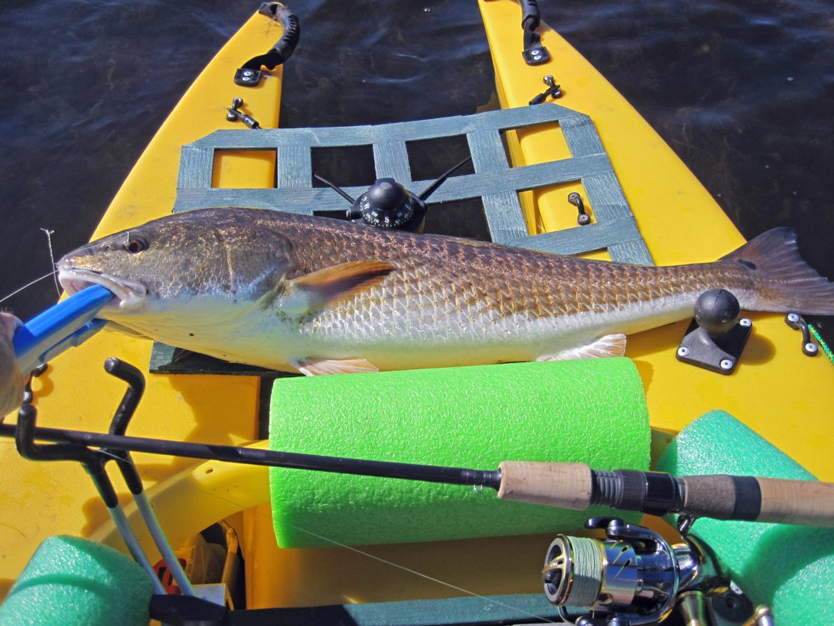 redfish in kayak