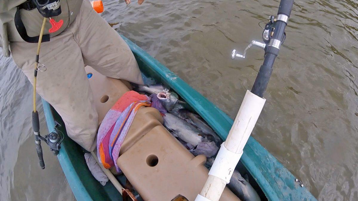Electric Wavewalk 700 kayak skiff full of Blue Catfish 1600