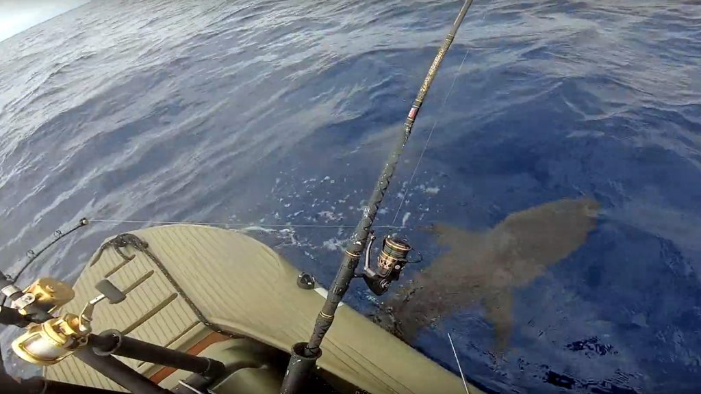 Shark hooked offshore - motorized Wavewalk S4 fishing kayak