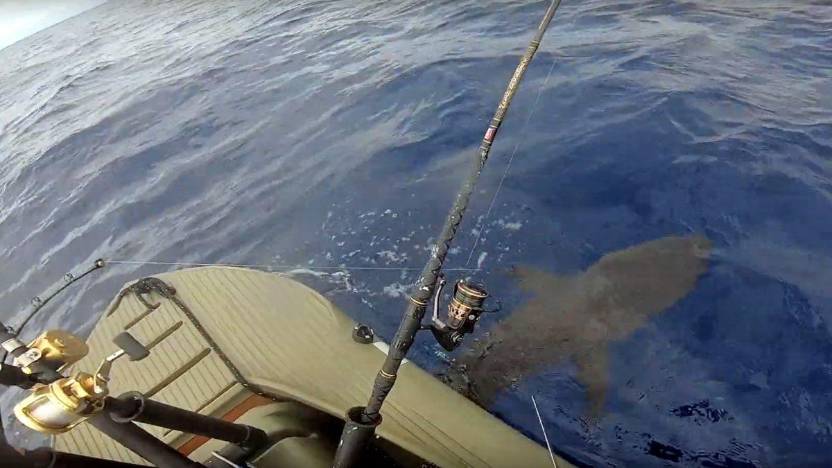 Shark fishing from an S4 kayak in the ocean, Hawaii